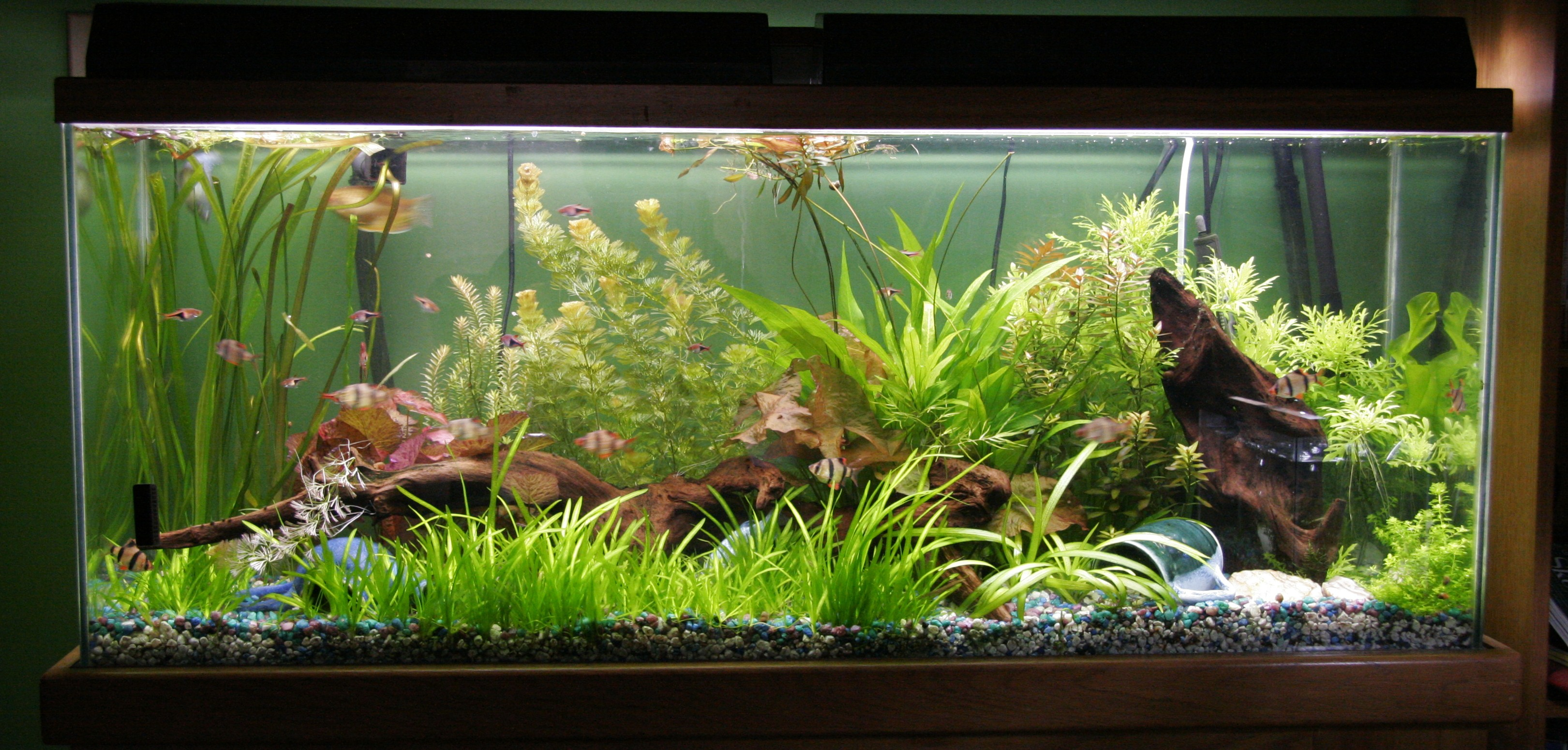 Freshwater aquarium fish ideas home decor ideas pics for 55 gallon aquarium decoration ideas